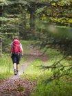Жінка походи в чорному лісі, Bad Wildbad, Баден-Вюртемберг, Німеччина — стокове фото