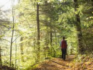 Rear view of woman on forest trail in Bad Teinach-Zavelstein, Baden-Wurttemberg, Germany — Stock Photo