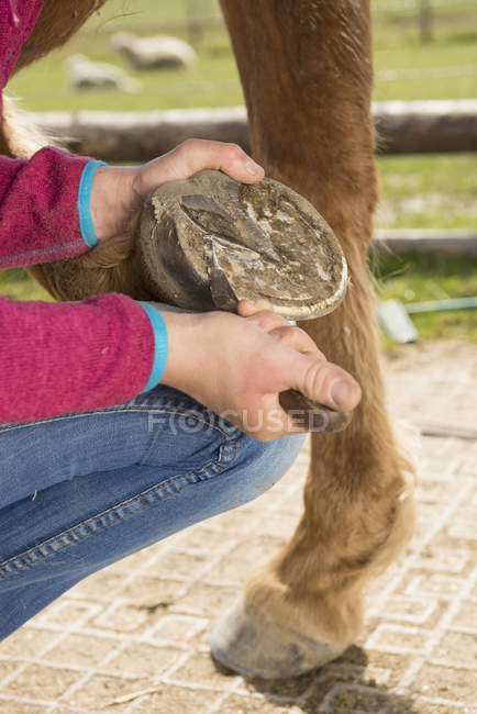 Woman cleaning horse's hoof — Stock Photo