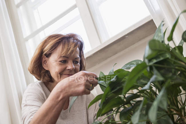 Senior woman examining plant leaves — Stock Photo