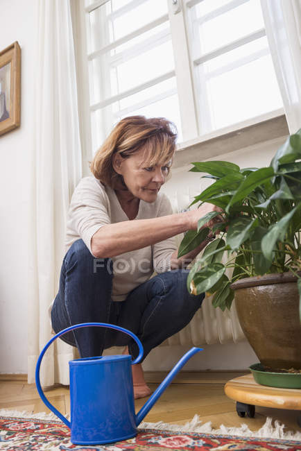 Senior woman looks at plant — Stock Photo
