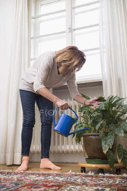 Senior woman watering houseplant — Stock Photo