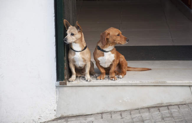 Dogs sitting side by side — Stock Photo