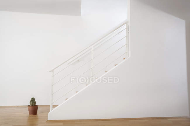 Cactus plant placed near staircase — Stock Photo