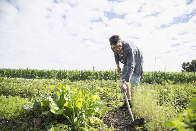 Man working in community garden — Stock Photo