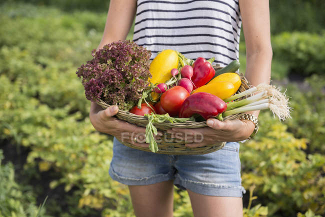 Woman with vegetables basket in community garden — Stock Photo