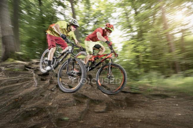 Два горных велосипедиста едут по корням — стоковое фото