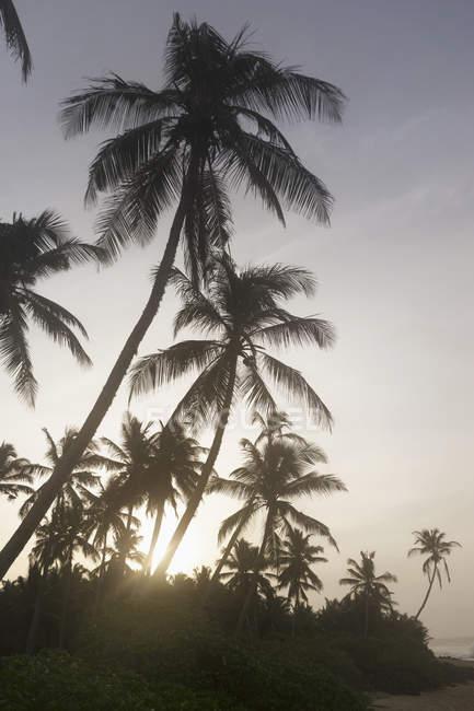 Пальмы на пляже — стоковое фото