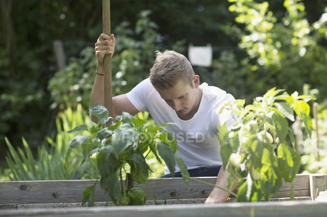 Людина, що працюють в міському саду — стокове фото