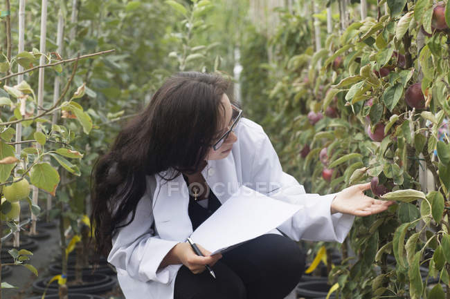 Scientist inspecting plants at greenhouse — Stock Photo