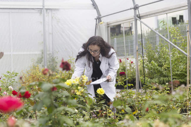 Scientist inspecting flowers — Stock Photo