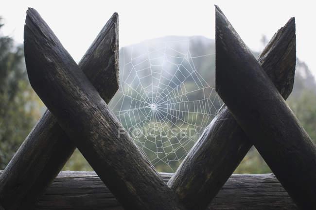 Toile d'araignée entre deux poteaux de clôture — Photo de stock