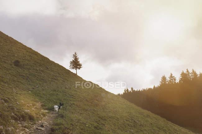 Pé de cão na colina — Fotografia de Stock