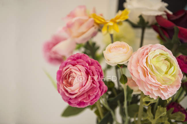 Multi coloured roses — Stock Photo