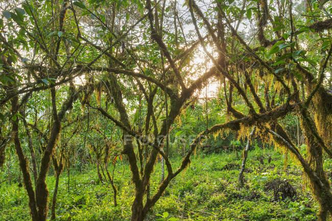Arbres couverts de mousse et l'herbe — Photo de stock