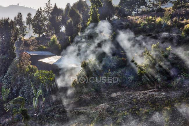 Вид на деревья и дома — стоковое фото