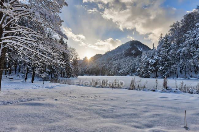 Замороженные Hechtsee озеро с снегом покрыты деревья — стоковое фото