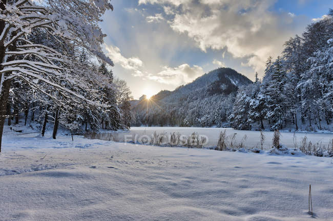 Frozen Hechtsee lake with snow covered trees — Stock Photo