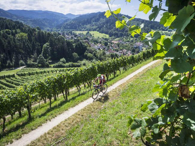 Горный байкер верхом на трек через виноградники — стоковое фото