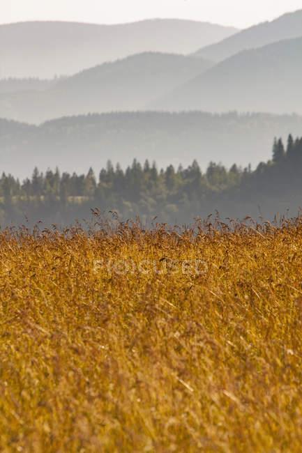 Campo del raccolto con alberi e montuosa — Foto stock