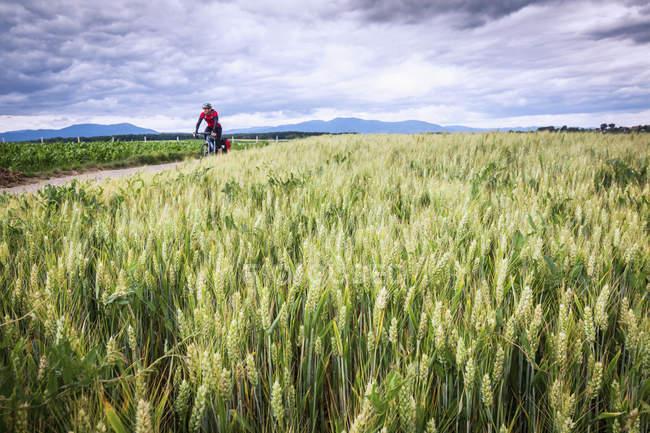 Homem de sportswear andar de bicicleta na estrada — Fotografia de Stock