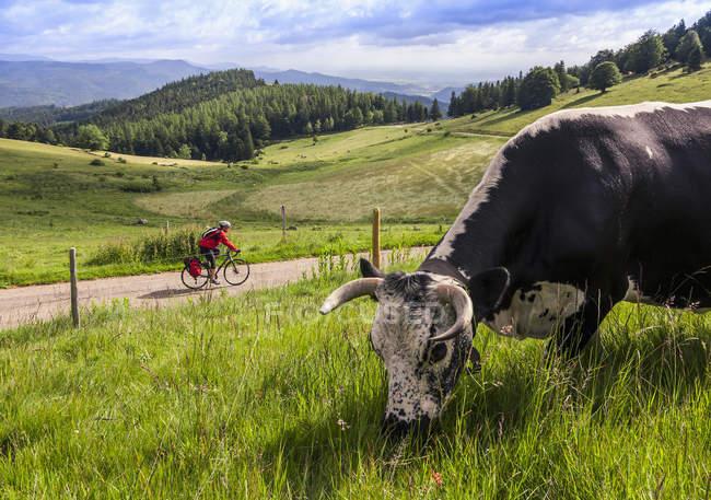 Человек на соло велосипедов дорожного путешествия — стоковое фото