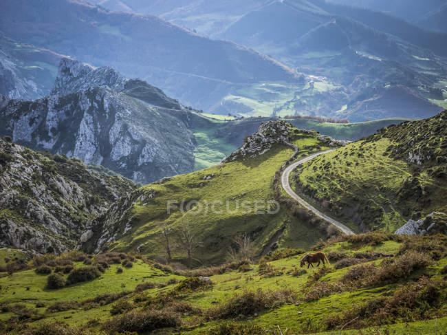 Horse grazing in Picos de Europa — стоковое фото