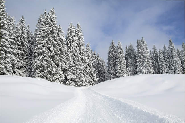 Snowmobile track on snow by trees — tranquil scene, beauty in nature