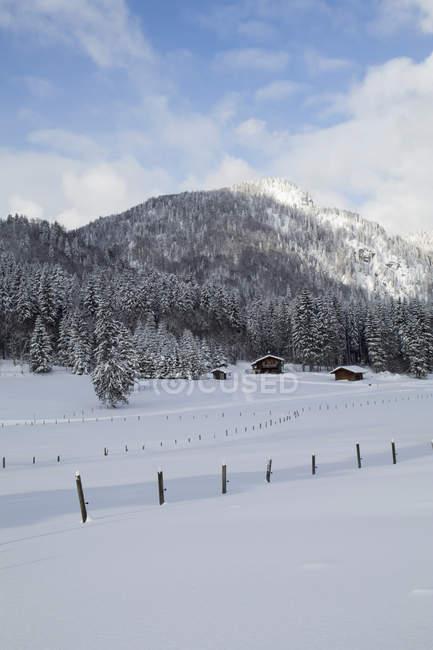 Деревянные столбы на заснеженные пейзаж — стоковое фото