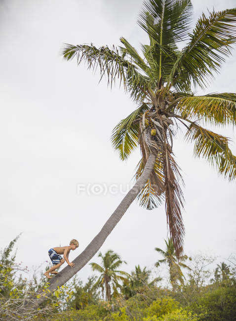 Мальчик, забравшись на кокосовой пальмы. — стоковое фото