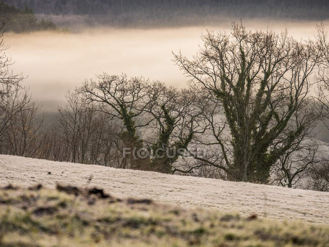 Winter morning in valley of Yach — Stock Photo