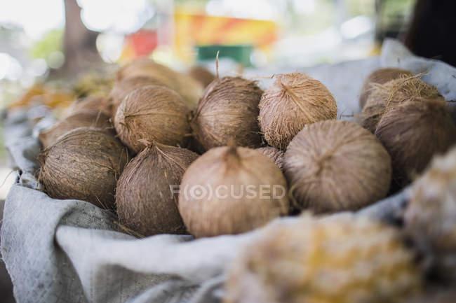 Vista de cerca de cocos frescos en la cesta - foto de stock