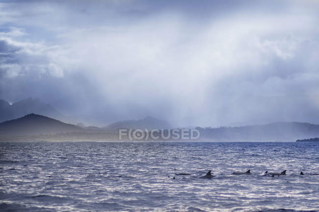 Scenic view of dolphins at Indian Ocean — Stock Photo