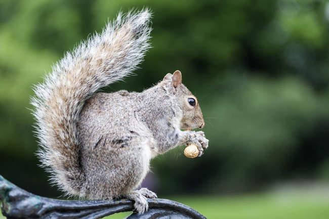 Белки питание орех парк — стоковое фото