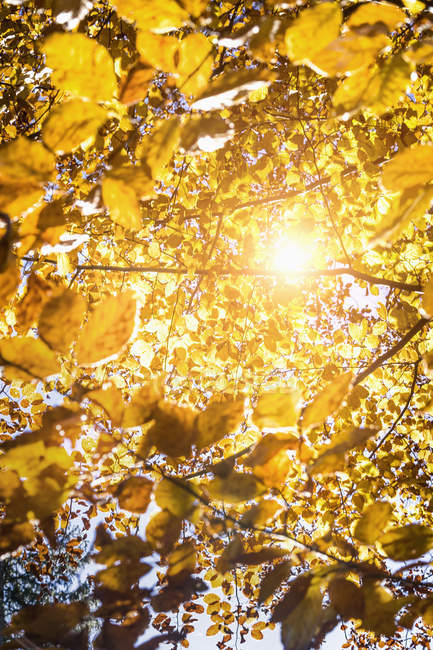 Солнце светит через осень листья в лесу — стоковое фото