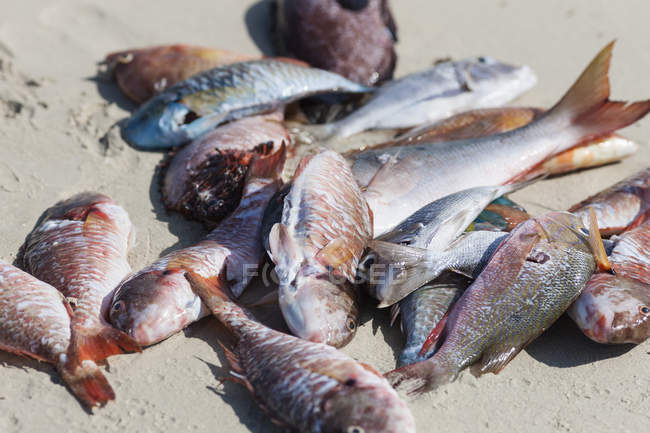 Freshly caught fish on sand at beach, close-up — Stock Photo