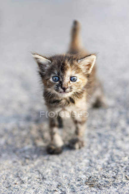 Close-up of fluffy tabby kitten looking in camera on street — Stock Photo