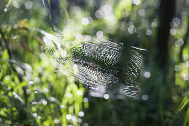 Spider sitting on patterned web in forest, close-up — Stock Photo