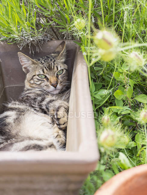 Domestic cat resting in empty plant pot — Stock Photo