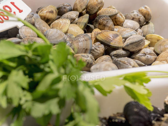 Gros plan des moules chamelea à vendre au marché aux poissons — Photo de stock