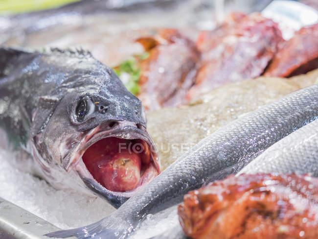 Fische zum Verkauf auf dem Fischmarkt — Stockfoto
