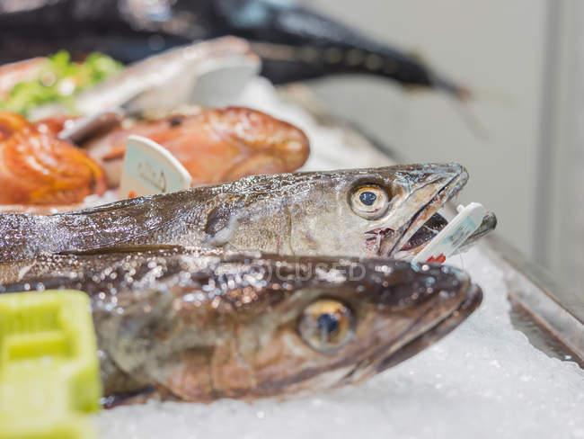 Fische mit einer Vielzahl von Meeresfrüchten zum Verkauf auf dem Fischmarkt — Stockfoto