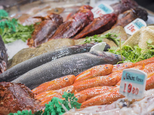 Various seafood for sale at fish market — healthy food