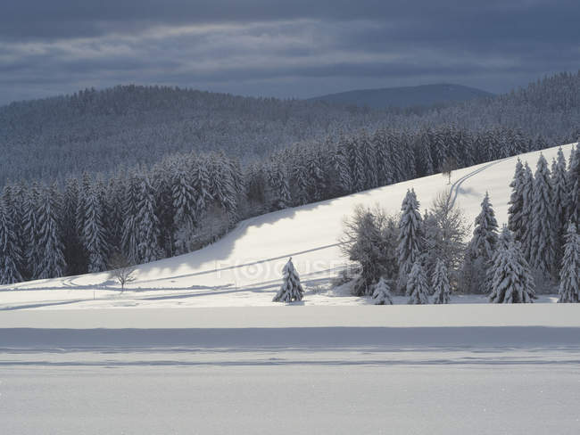Scenic view of ski track Thurnerspur in  Black Forest mountains, Baden-Wurttemberg, Germany — Stock Photo