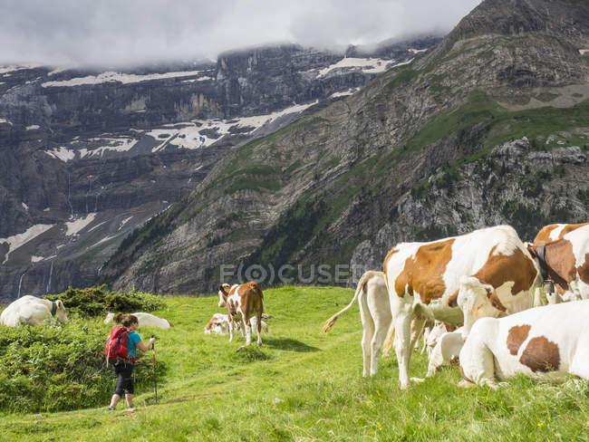 Жіночий backpacker походи корів на Cirque de Гаварні високий Піренеїв, Франція — стокове фото