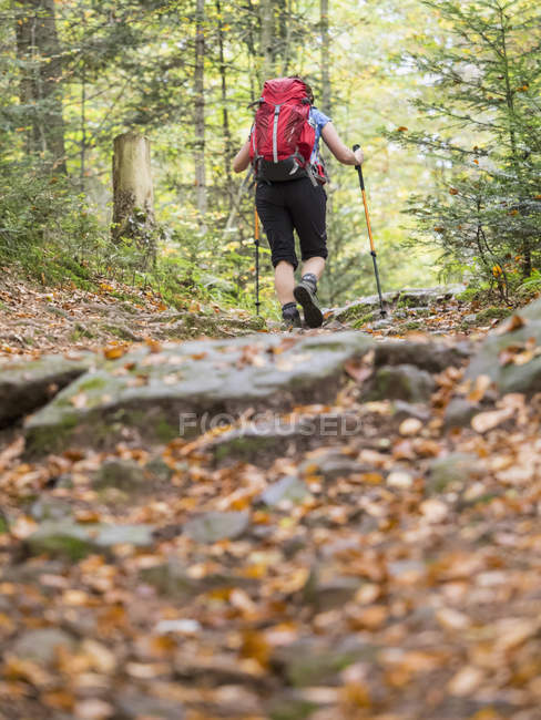Vista de ângulo baixo da mulher caminhadas na floresta — Fotografia de Stock