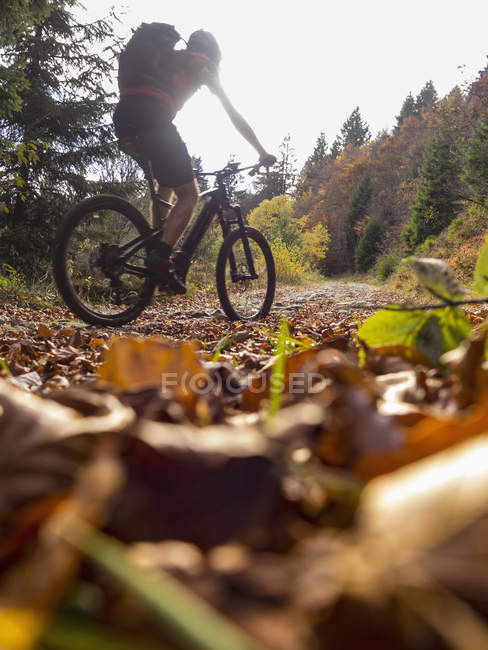 Blick auf Mountainbiker-Kletterpfad in Wäldern im Elsass, Frankreich — Stockfoto