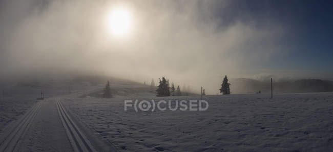 Cross country skiing track in winter landscape, Black Forest, Feldberg, Germany — Stock Photo