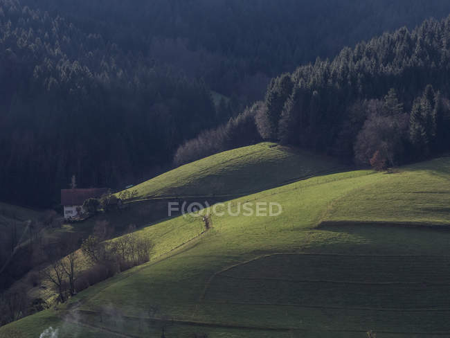 Farmhouse and field at Black Forest, Baden-Wurttemberg, Germany — Stock Photo