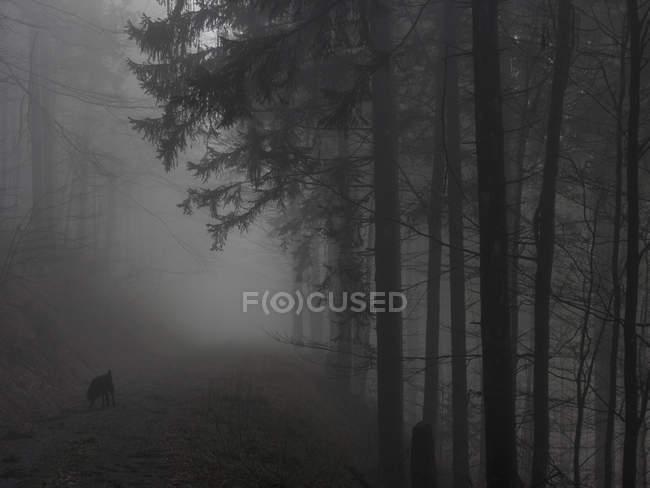 Silhouettes d'arbres et de chien dans la Forêt brumeuse — Photo de stock